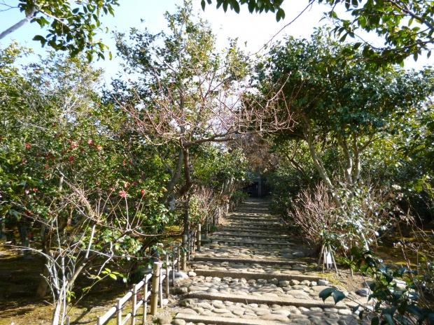 園内の道は大木の椿に囲まれています。