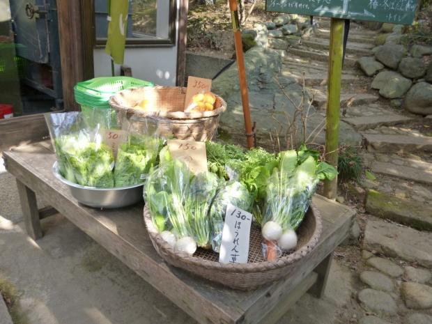 新鮮な野菜も並んでいます