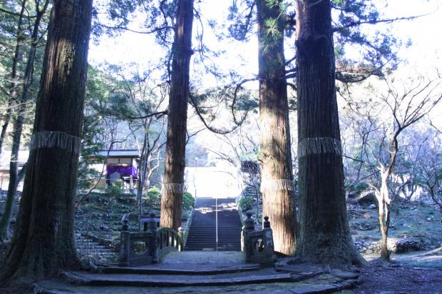 天を突く杉の巨木
