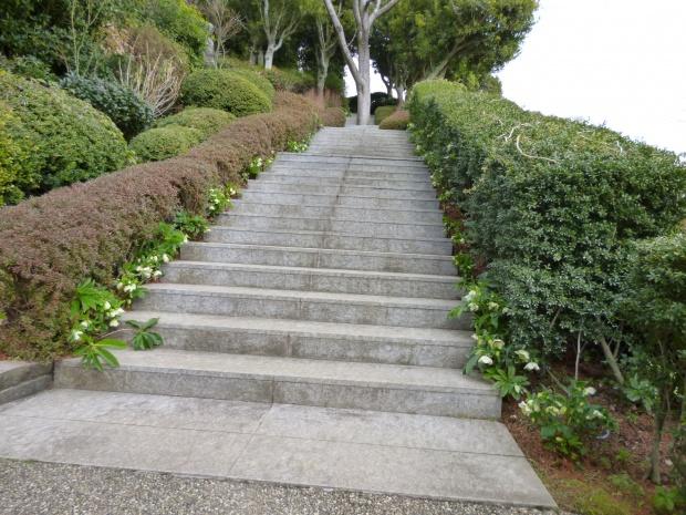 階段をクリスマスローズが案内