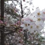 開いている花弁