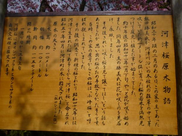 河津桜原木物語の説明版
