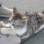朝比奈川の子猫