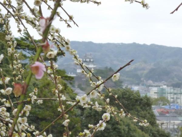 小高い山の向こうには掛川城
