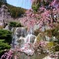 水の流れと枝垂れる梅花