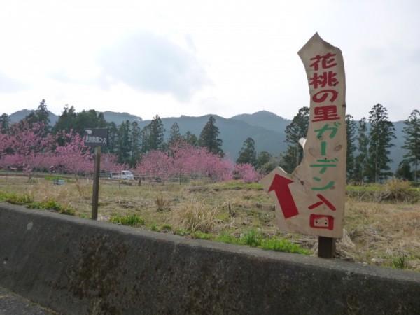 小高い山の上には花桃の里ガーデン