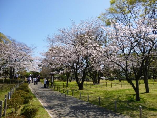 双葉葵の小径の桜