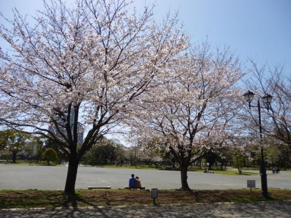 桜は優しい気持ちになります
