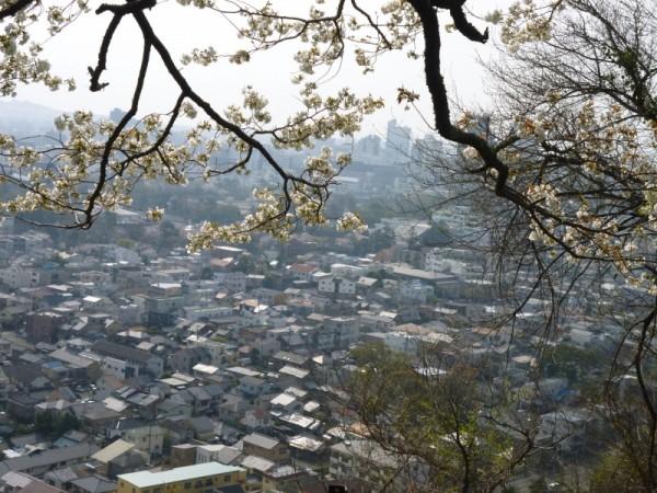 賎機山より市街地を望む