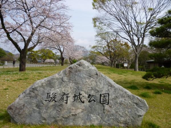 駿府城公園には多くの桜