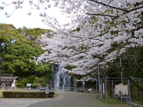 清水山公園の桜