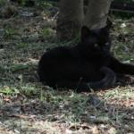 蓮花寺池公園のネコ