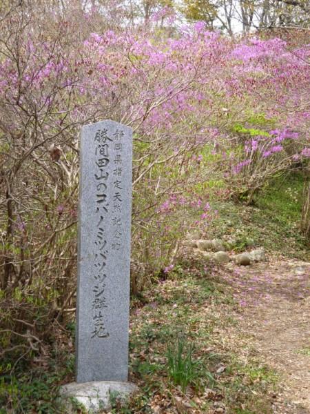 コバノミツバツツジの標識