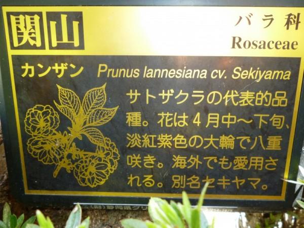 関山の案内板