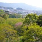 蓮花寺池公園の山から見渡す