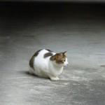 静居寺さんの猫ちゃん?