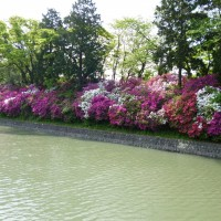 駿府城公園のツツジ(静岡市)