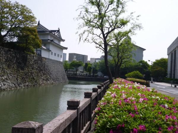 駿府城公園のツツジ