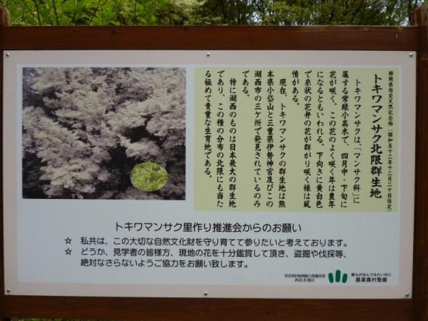 湖西市神座地区のトキワマンサク案内板