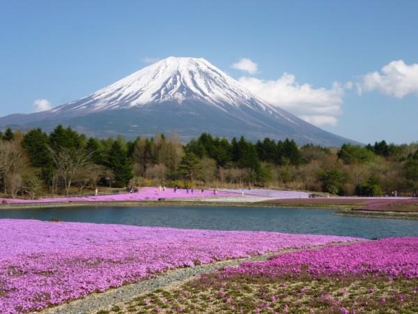 一面の芝桜と富士山