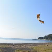 はなさんぽ通信「沼津御用邸記念公園で 島郷とんび凧 を見る」