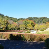はなさんぽ通信「散歩中、静岡市城北公園の紅葉を楽しむ」