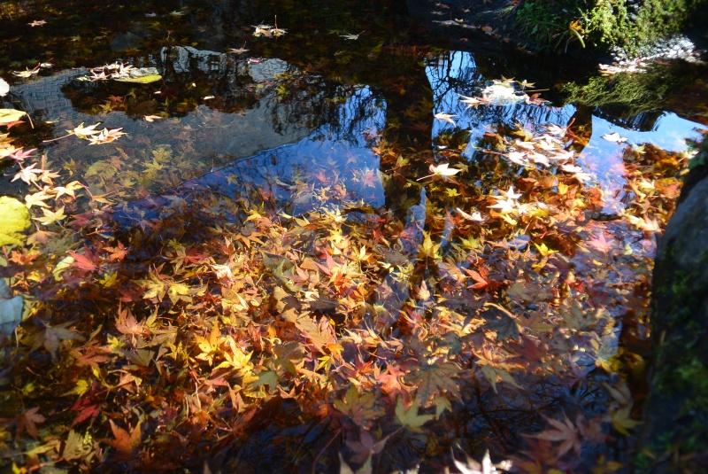 天城・昭和の森会館庭園の紅葉(伊豆市)