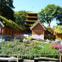楽寿園の「菊まつり」と紅葉・文教町イチョウ並木の黄葉(三島市)