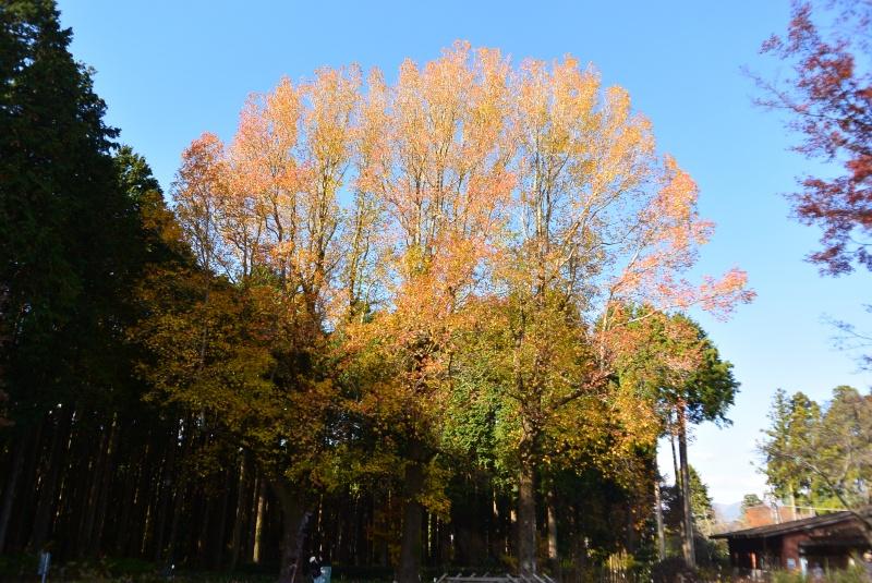 秩父宮記念公園の紅葉(御殿場市)