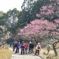 岩本山公園の梅まつり(富士市)