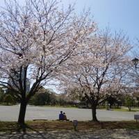 はなさんぽ通信「日本気象協会桜開花情報と日本五大桜」