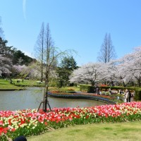 はままつフラワーパーク 桜とチューリップの庭園(浜松市)