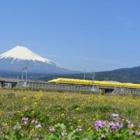 はなさんぽ通信「黄色い新幹線・ドクターイエロー」