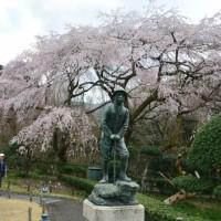 秩父宮記念公園 しだれ桜と春の山野草2(御殿場市)