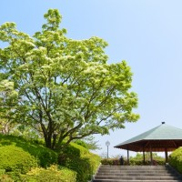 はなさんぽ通信「城北公園の花 4/24」