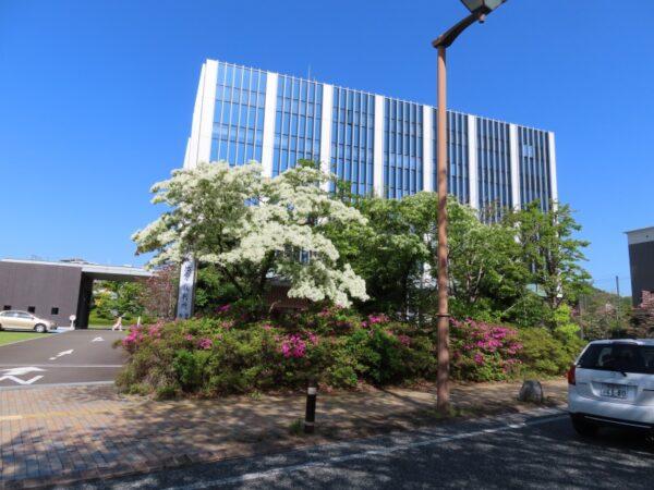 駿府城公園・静岡裁判所のヒトツバタゴ(なんじゃもんじゃ)静岡市