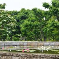 はなさんぽ通信「静岡県立美術館の初夏」