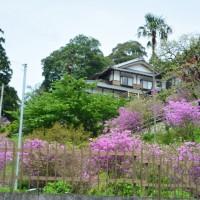 宝珠院のミヤマツツジ(浜松市)