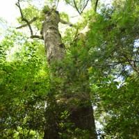 はなさんぽ通信「伊勢神宮と樹木」