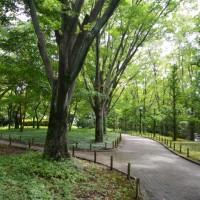 はなさんぽ通信「静岡県立美術館の涼しいケヤキ並木」