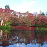 はなさんぽ通信「軽井沢の紅葉」