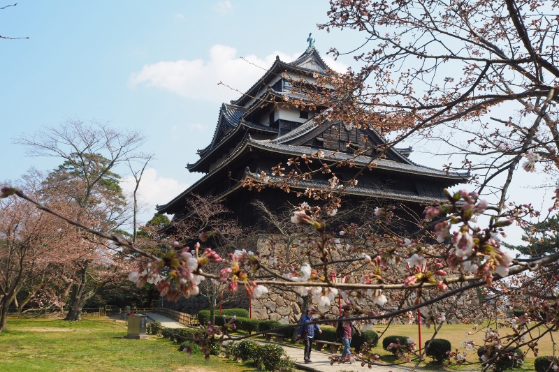 はなさんぽ通信「島根の春を楽しむ(2)松江城の桜と椿」