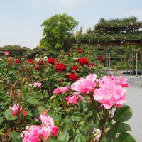 ばらの都苑のバラ(浜松市)