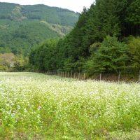 玉川地区・葵区桂山のそばの花(静岡市)