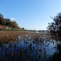 初冬の蓮華寺池公園(藤枝市)