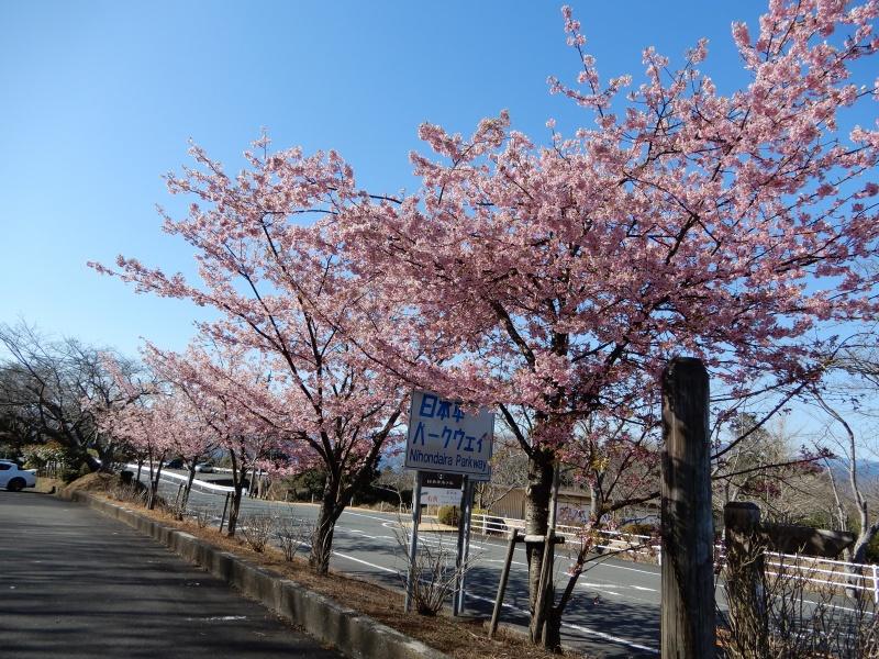 「第22回日本平梅まつり」の画像検索結果