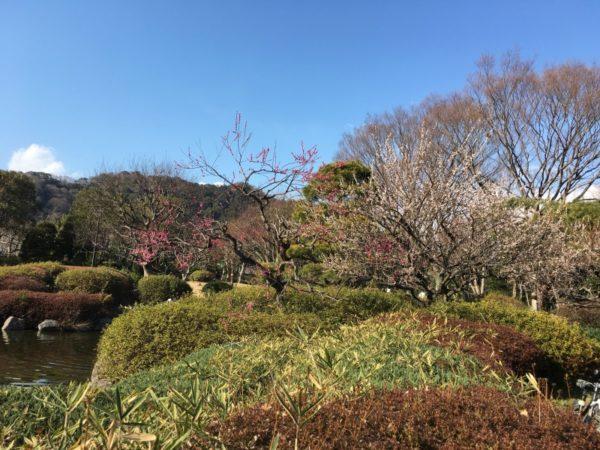 城北公園の梅(静岡市)