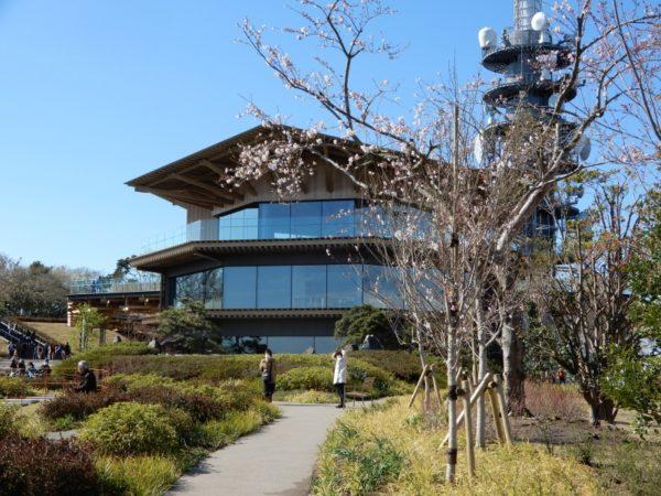 日本平・日本平ホテルの桜(染井吉野・山桜)静岡市