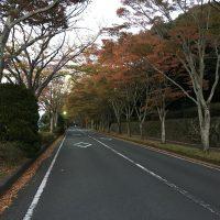 はなさんぽ通信「静岡県立美術館プロムナード照明灯の紅葉」