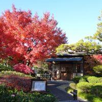 駿府城公園 紅葉山庭園の紅葉(静岡市)